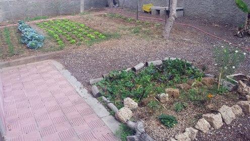 Small vegetable garden in the schoolyard of I.E.S. Magallanes San Isidro, Tenerife
