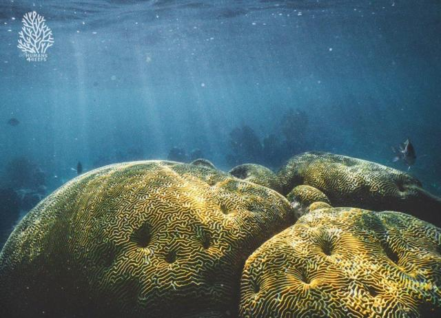 corales_humans4reefs_luvit_agua_3