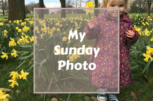 My-sunday-photo-02-04-2017