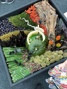 Frogs, bats, eyeballs and more in the Hocus Locus display at Southport Flower Show