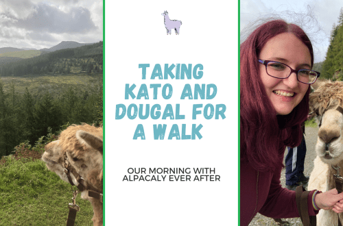 Blog title graphic with two images, first image is Kato the Alpaca looking out over the Lake District, second picture is Raimy, a 32 year old woman with purple hair and glasses, with Kato on my alpaca walk