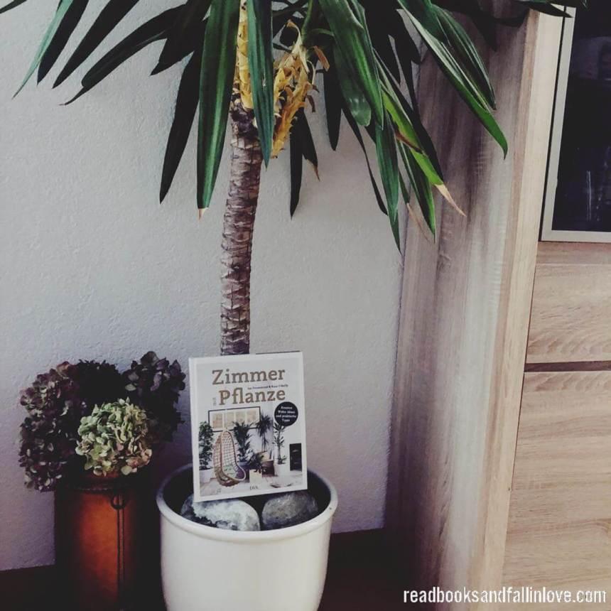 ZimmermitPflanze1.jpeg