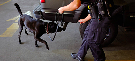 Colorado Springs police officer Andrew Genta and his dog Vader demonstrate a narcotic search on a vehicle in August 2013. (photo: Matthew Staver/Bloomberg News)