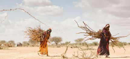 Climate change is already a growing cause of displacement and conflict where land has been devastated by drought. (photo: B. Bannon/UNHCR)
