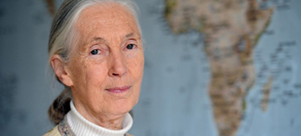 Jane Goodall. (photo: Getty Images)