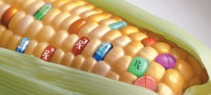 Corn is Number 1 on the list of GMO foods to avoid. (photo: Natural Society)