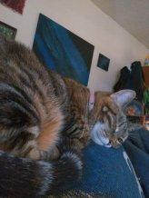 my cat, Devi