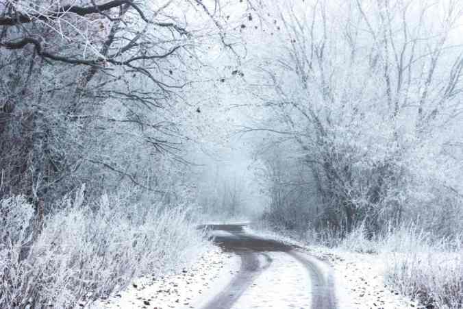 """Snowy forest with rough road passing into its depths, showing two tracks of vehicles. Reminiscent of """"Stopping by Woods on a Snowy Evening."""""""