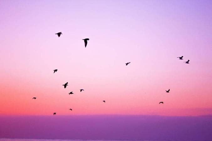 Birds flocking in a pink and purple sky.