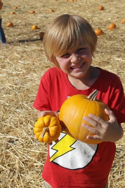 Avila Valley Barn Pumpkins & Hay