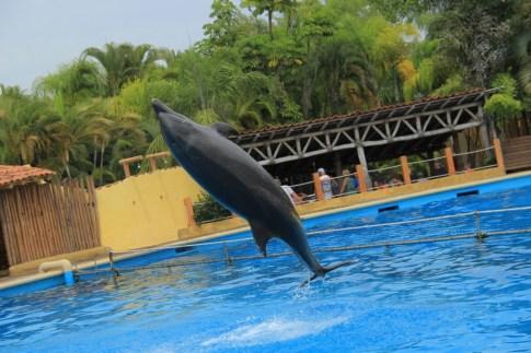 #PuertoVallarta #DolphinSwim #Travel #Honeymoon #Wedding #Carnival #FrankAndShannon