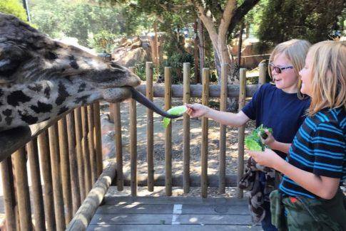 #Zoo #travel #kids #summer