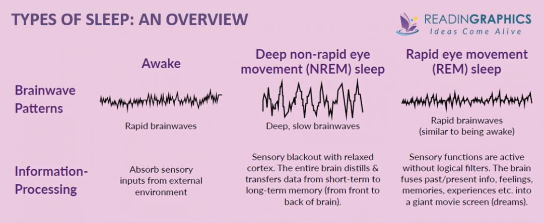 Why We Sleep summary_types of sleep