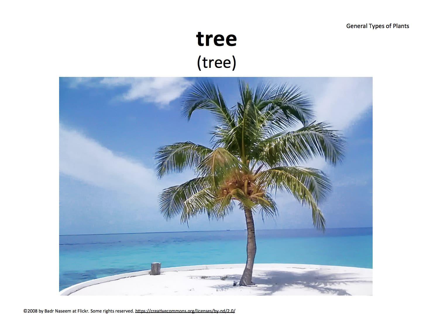 Tree - palm tree