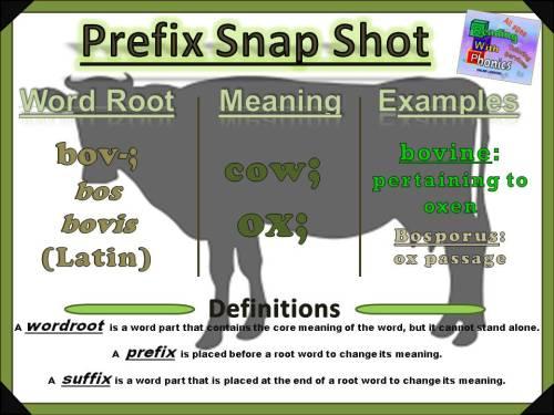 bov-prefix-snap-shot
