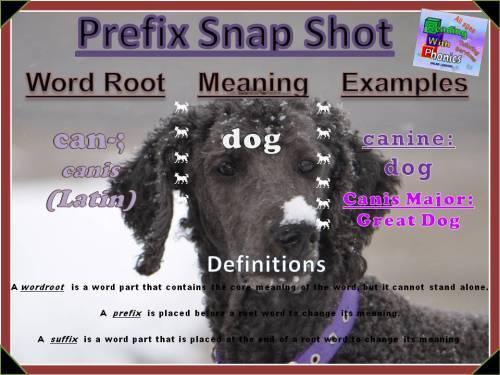 can-prefix-snap-shot