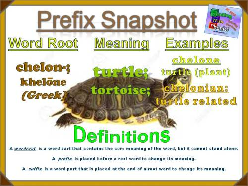 chelon- Prefix Snapshot