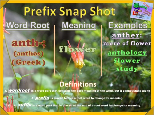 anth- Prefix Snap Shot