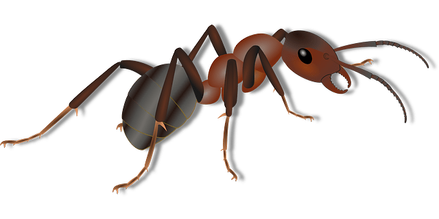 Compile, deploy and start Tomcat with Ant script