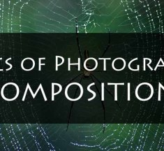 Composition – Basics of Photography