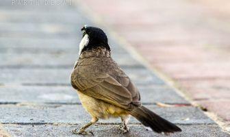 animal photography tutorials