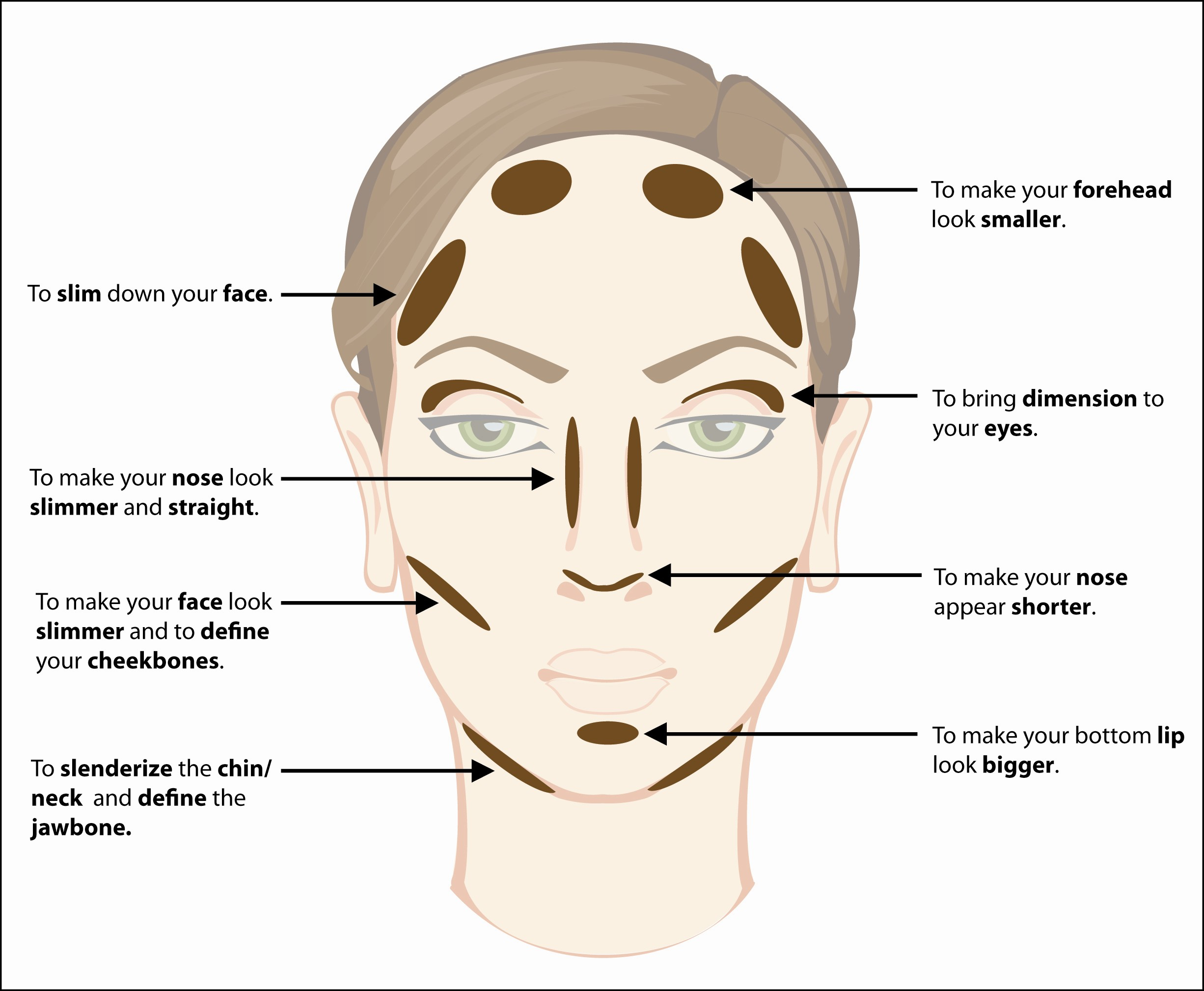 Worksheet Parts Of The Face