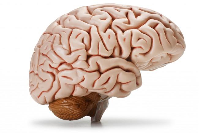 Brain-image-650x433