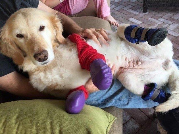 chi-chi-dog-1