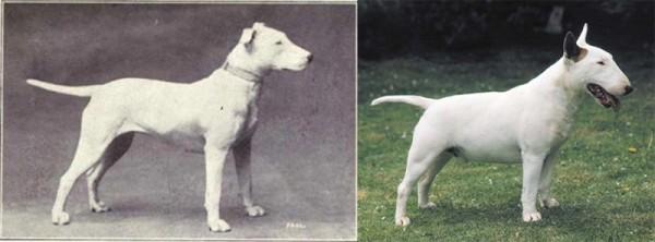 select-dog-1