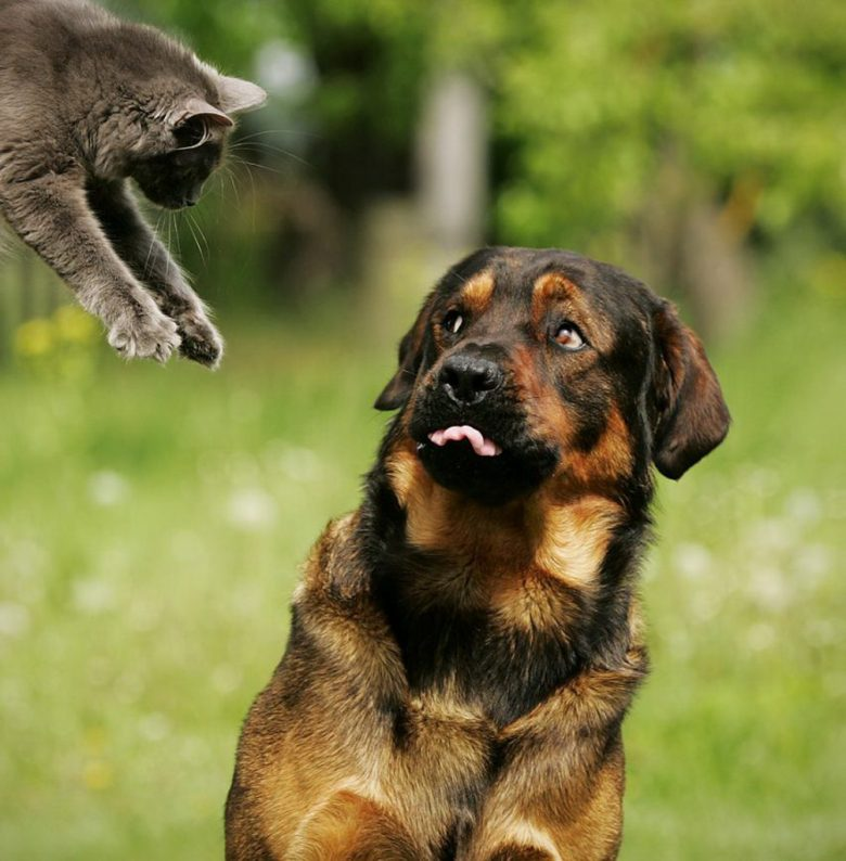 cats-vs-dogs-01