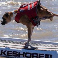 Дункан - неунывающий пёс без задних лап