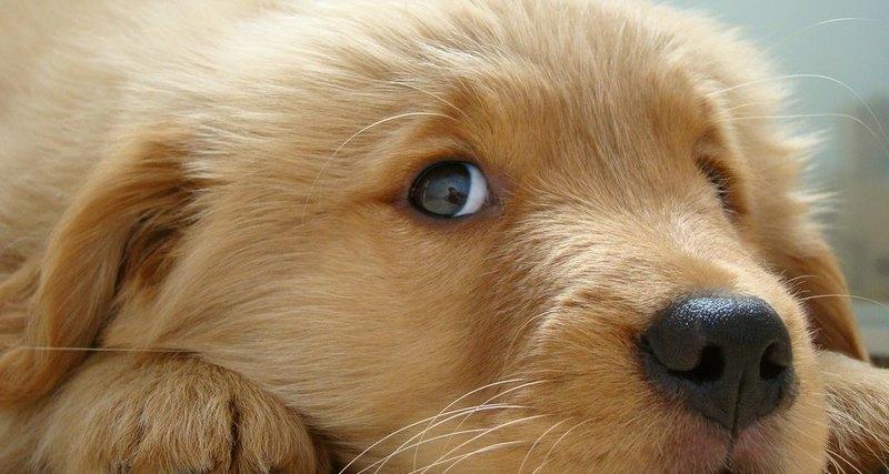 Ни красного, ни четкости: как собаки видят мир
