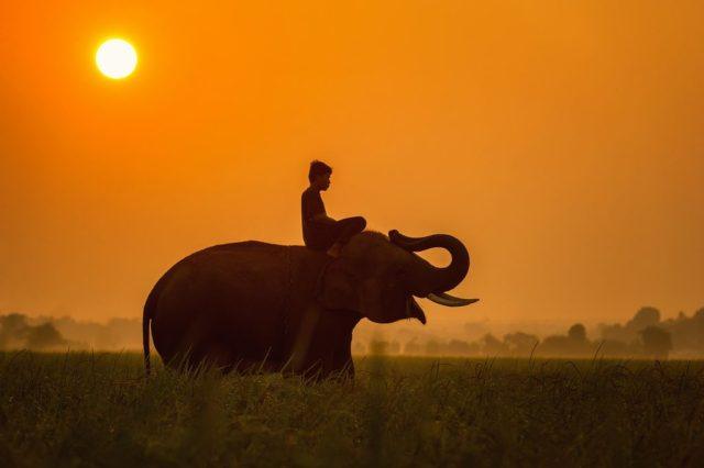 cambodia-elephant