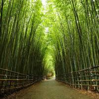 MIAOLI|Tai'an Bamboo Forest : A Beautiful Trail in Taiwan