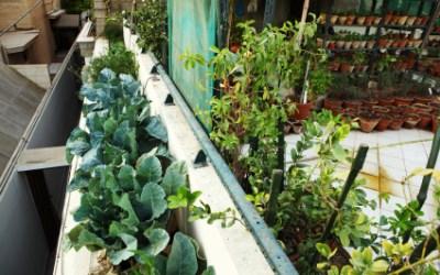 Urban Gardening: Grow Anywhere!