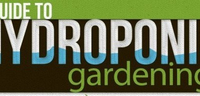 The Benefits of Hydroponic Gardening: An Infograph