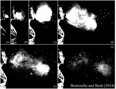The sneeze cloud. (Courtesy John Bush and Lydia Bourouiba)