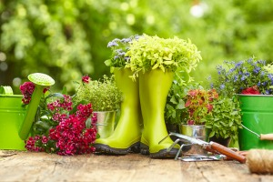 Strong Correlation Seen Between Flowers and Emotional Health