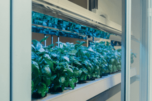 click n grow smart farm