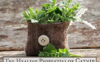 The Healing Properties of Catnip