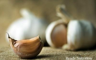 Harvesting Garlic for Natural Medicine