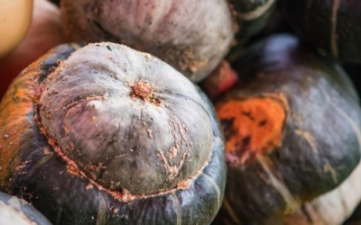 The Autumn Harvest: How To Store and Cook With Winter Squash (plus recipes)
