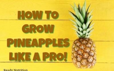 How To Grow Pineapples Like a Pro!