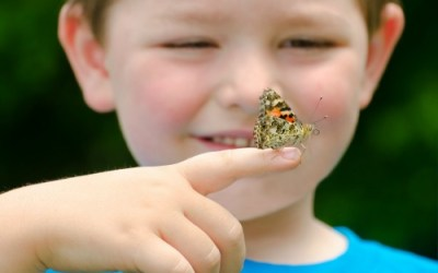 Create Your Own Butterfly Kingdom with this Child-Friendly Project