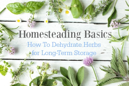 dehydrating herbs for storage