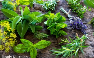 20 Medicinal Herbs That I Have in My Prepper Garden