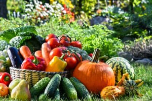 Grow your own delicious produce with Ready Gardens seeds.