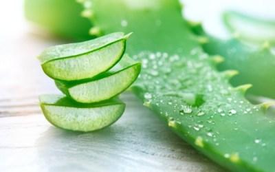 The Healing Powers of Aloe Vera