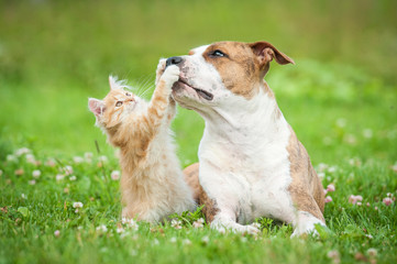 4 Things You SHOULDN'T Do & 2 Things You SHOULD Do With Your Pet In Summer