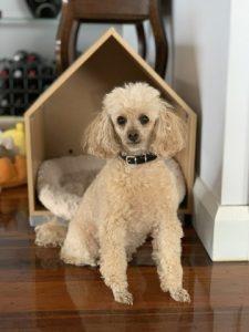 Poodle dog house